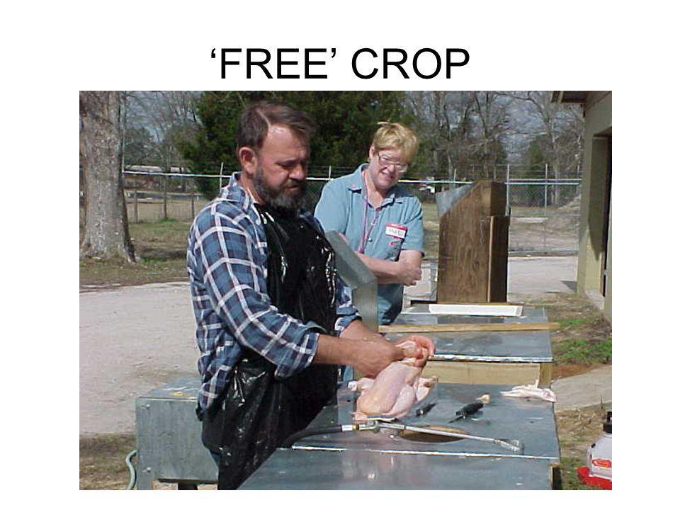 'FREE' CROP