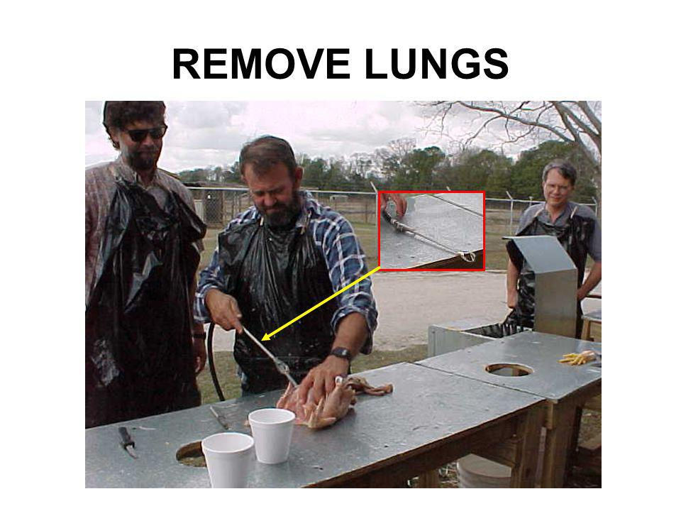 REMOVE LUNGS