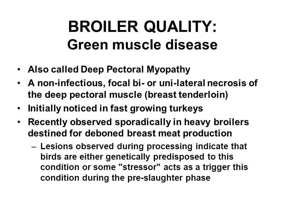 BROILER QUALITY: Green muscle disease