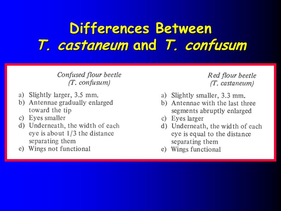 T. castaneum and T. confusum