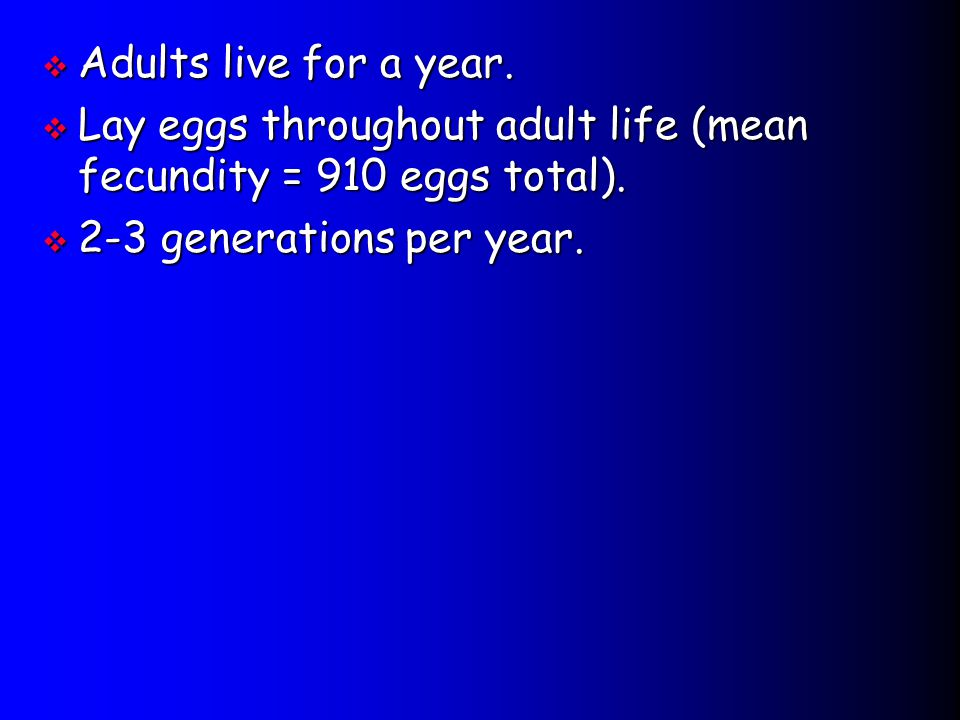 Lay eggs throughout adult life (mean fecundity = 910 eggs total).