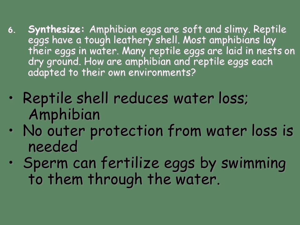 • Reptile shell reduces water loss; Amphibian