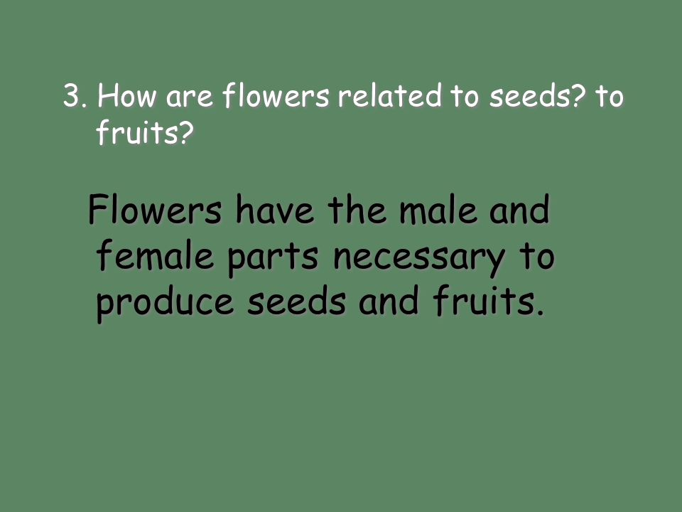 3. How are flowers related to seeds to fruits