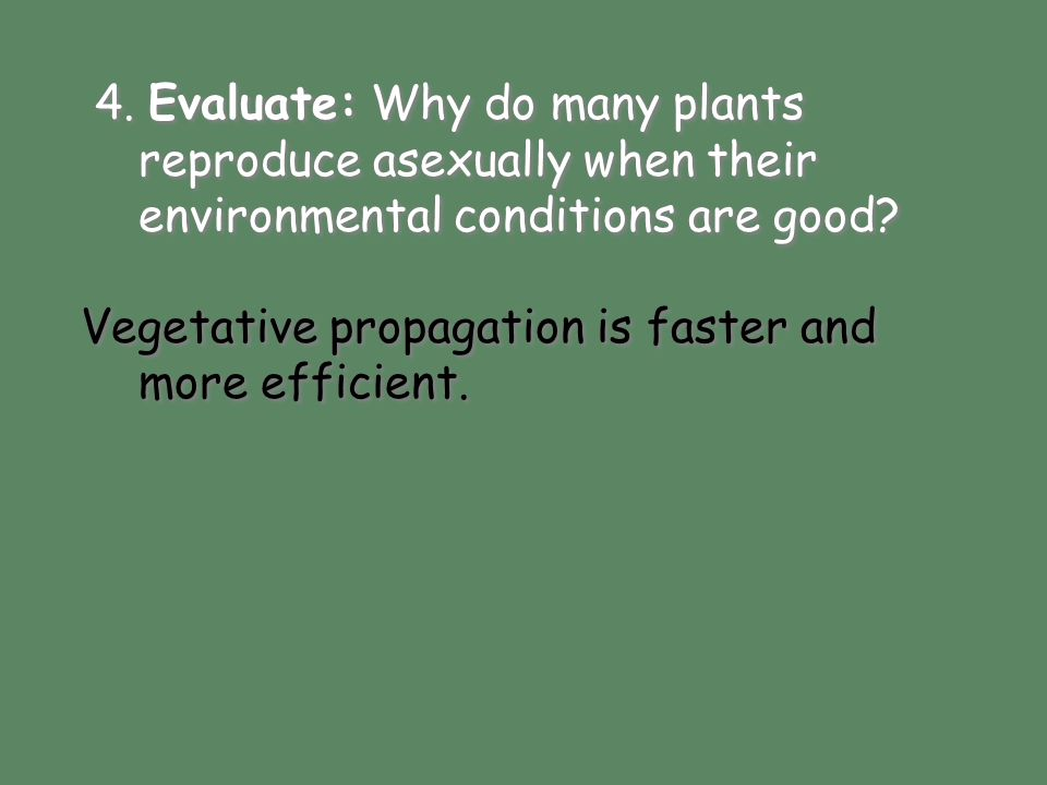 4. Evaluate: Why do many plants reproduce asexually when their environmental conditions are good