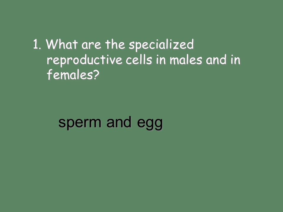 1. What are the specialized reproductive cells in males and in females