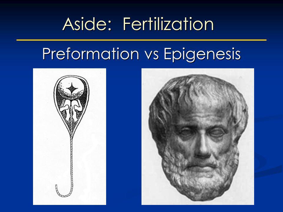 Preformation vs Epigenesis