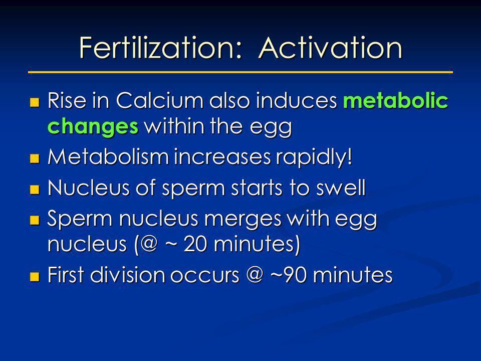 Fertilization: Activation