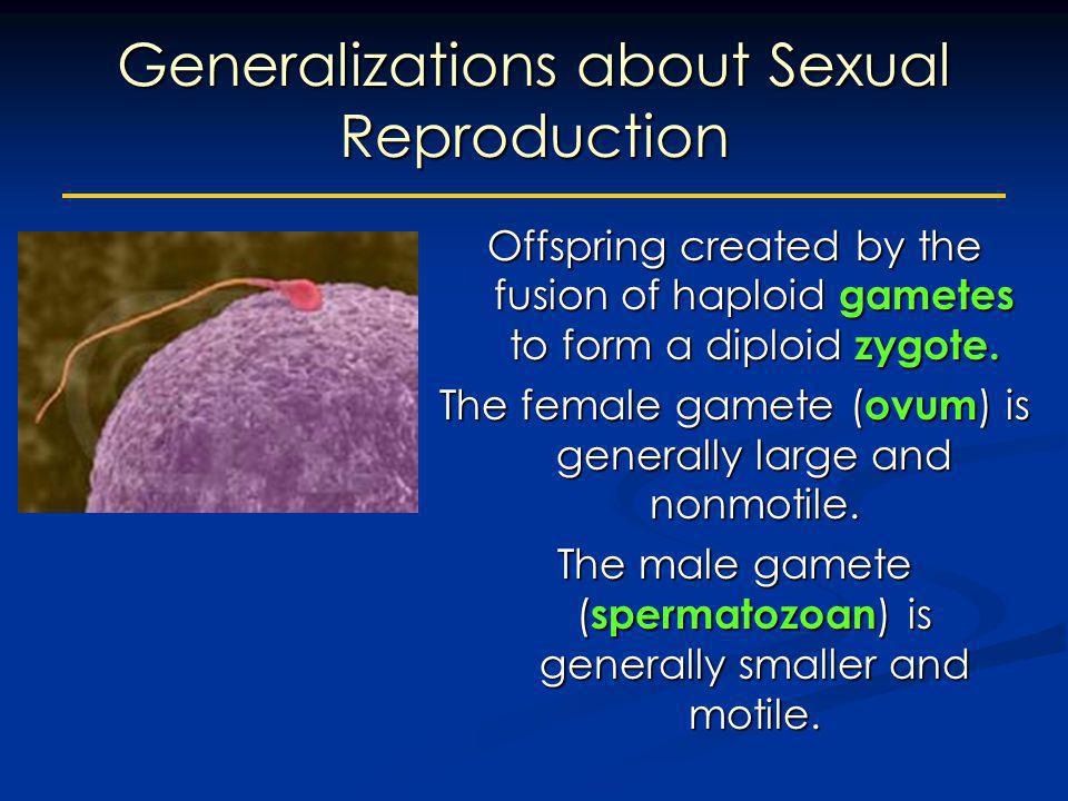 Generalizations about Sexual Reproduction