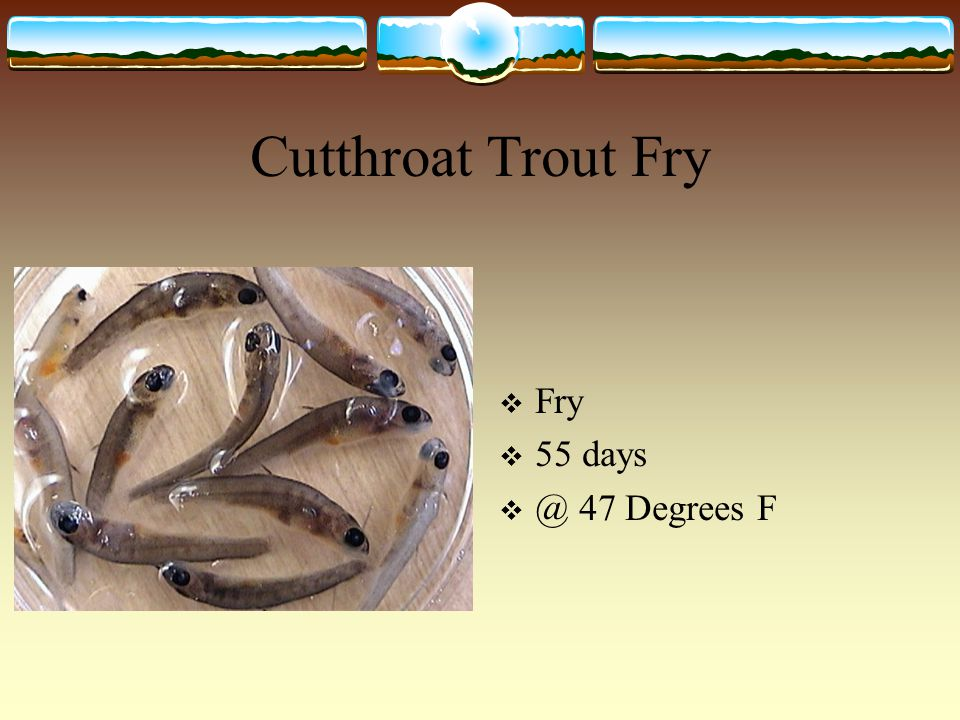 Cutthroat Trout Fry Fry Degrees F