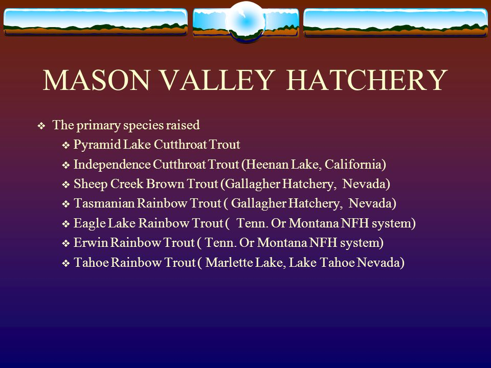 MASON VALLEY HATCHERY The primary species raised