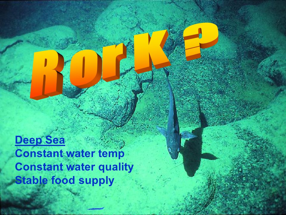 R or K Deep Sea Constant water temp Constant water quality
