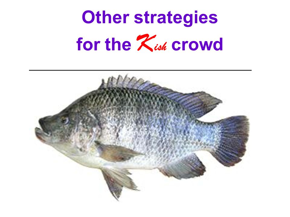 Other strategies for the Kish crowd
