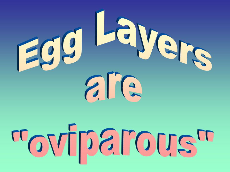 Egg Layers are oviparous