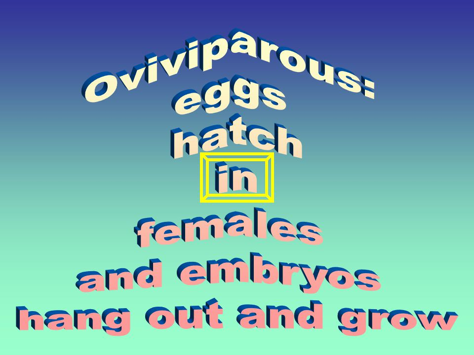 Oviviparous: eggs hatch in females and embryos hang out and grow