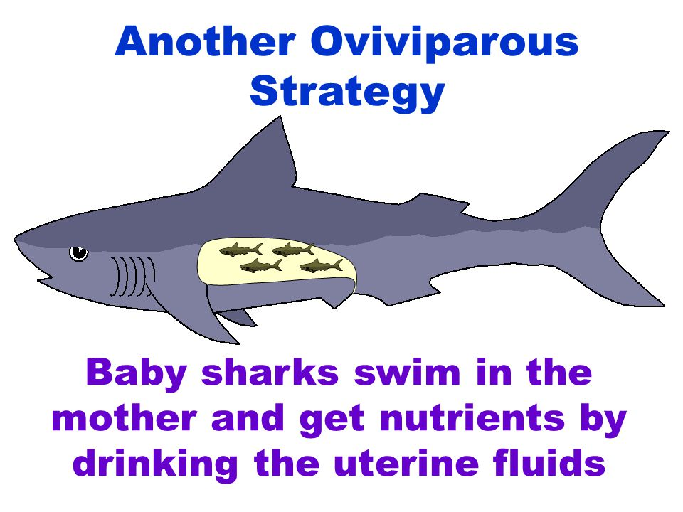 Another Oviviparous Strategy