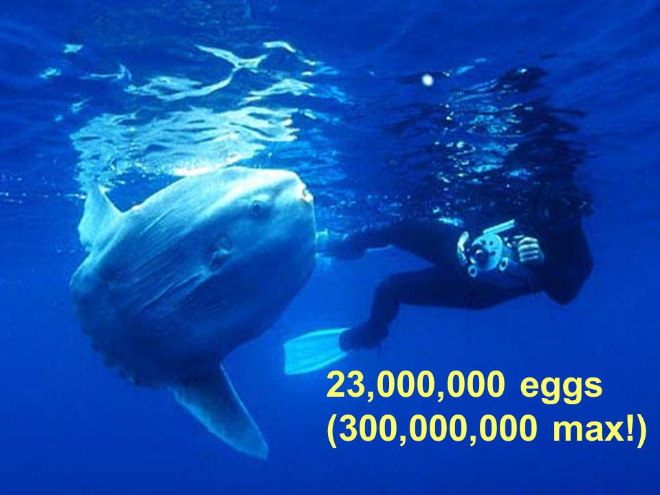 23,000,000 eggs (300,000,000 max!)
