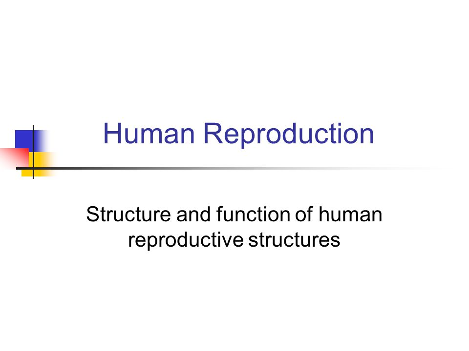 Structure and function of human reproductive structures