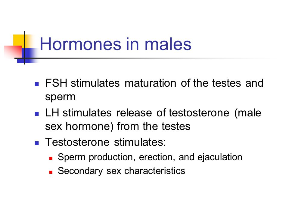 Hormones in males FSH stimulates maturation of the testes and sperm
