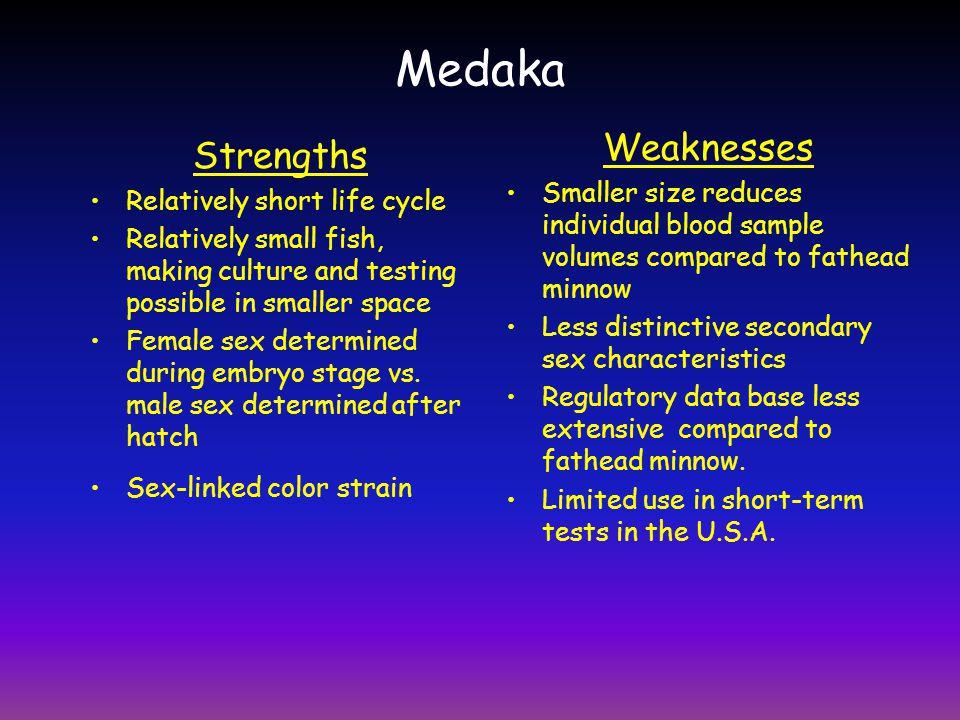 Medaka Weaknesses Strengths