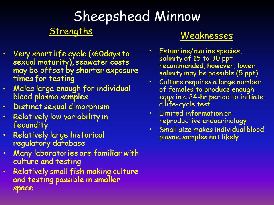 Sheepshead Minnow Strengths Weaknesses