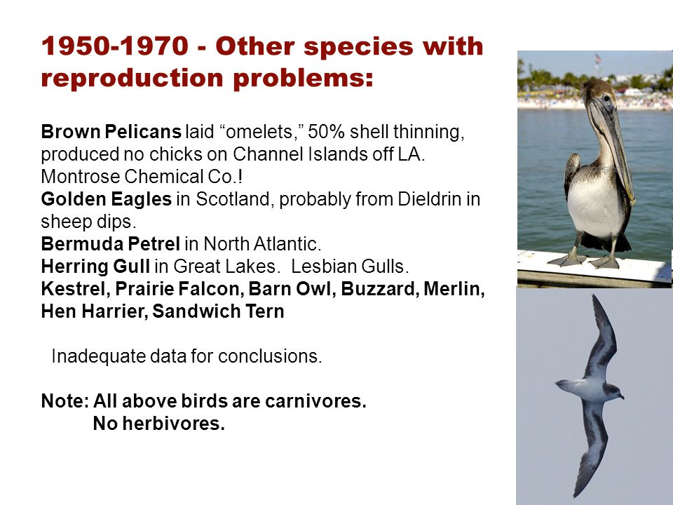 1950-1970 - Other species with reproduction problems:
