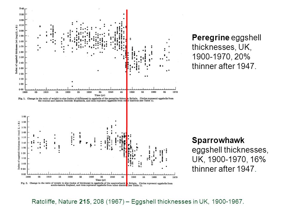 Peregrine eggshell thicknesses, UK, 1900-1970, 20% thinner after 1947.