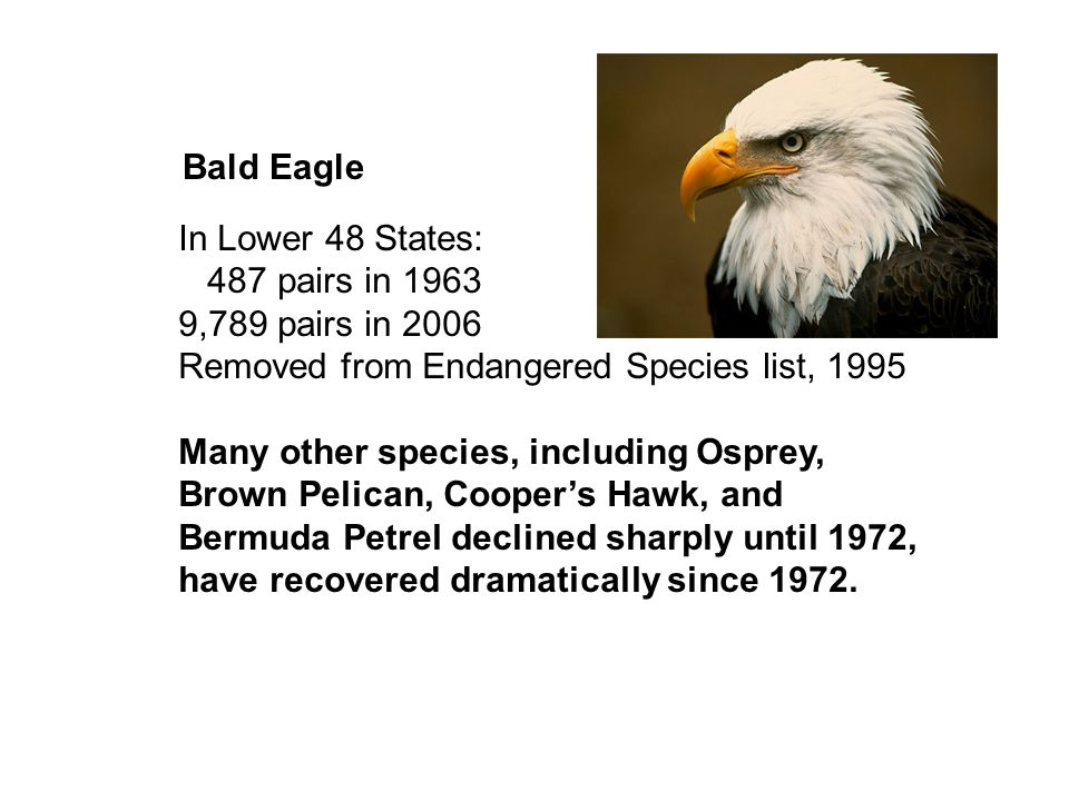 Bald Eagle In Lower 48 States: 487 pairs in 1963. 9,789 pairs in 2006. Removed from Endangered Species list, 1995.
