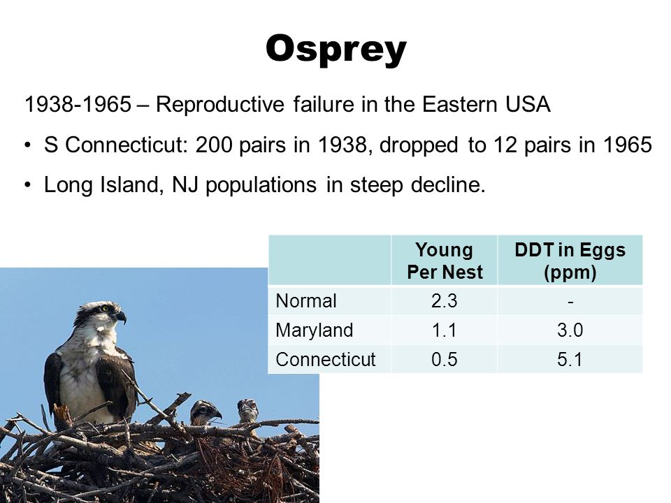 Osprey 1938-1965 – Reproductive failure in the Eastern USA
