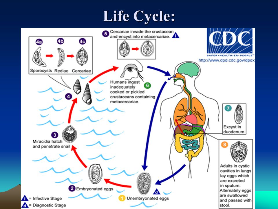 Life Cycle: Life Cycle: