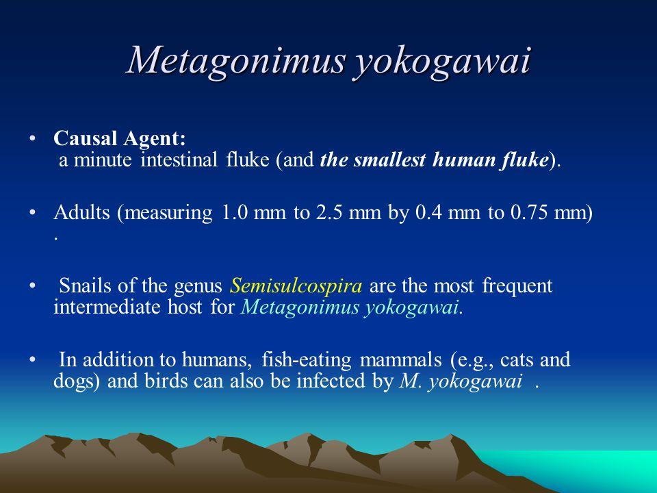 Metagonimus yokogawai