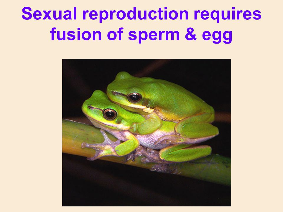 Sexual reproduction requires fusion of sperm & egg