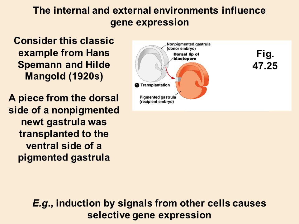 The internal and external environments influence gene expression