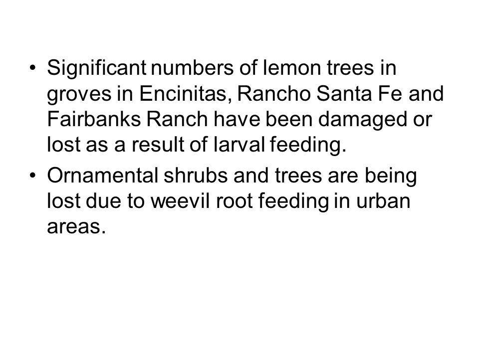Significant numbers of lemon trees in groves in Encinitas, Rancho Santa Fe and Fairbanks Ranch have been damaged or lost as a result of larval feeding.