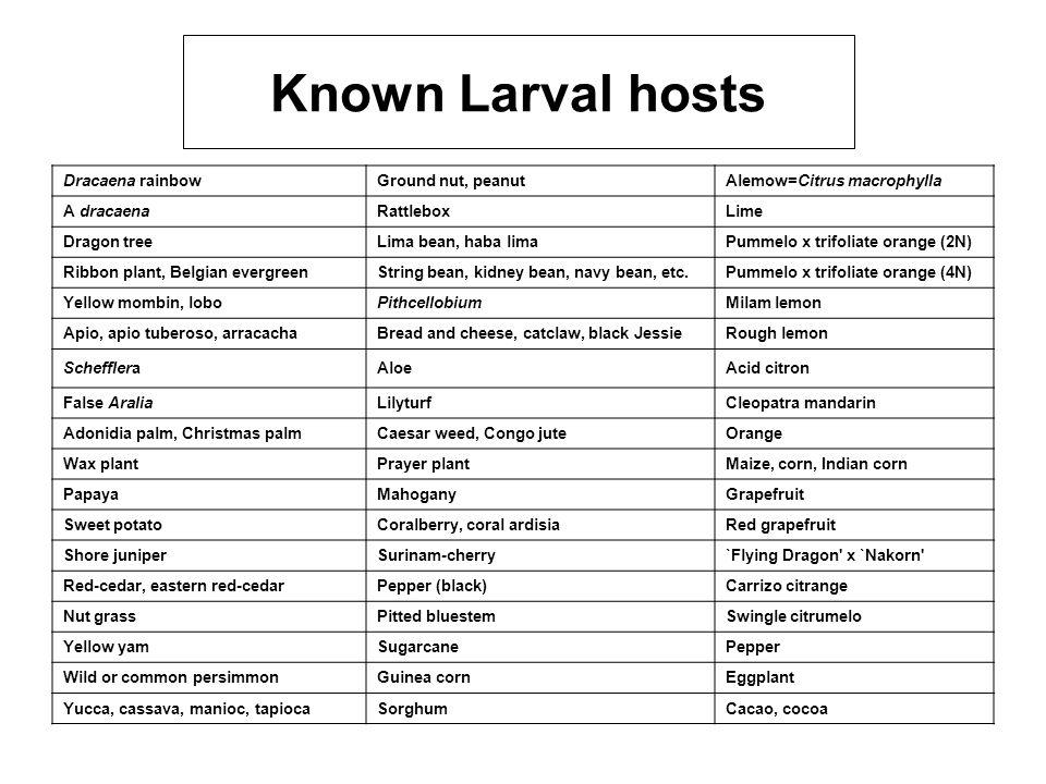 Known Larval hosts Dracaena rainbow Ground nut, peanut