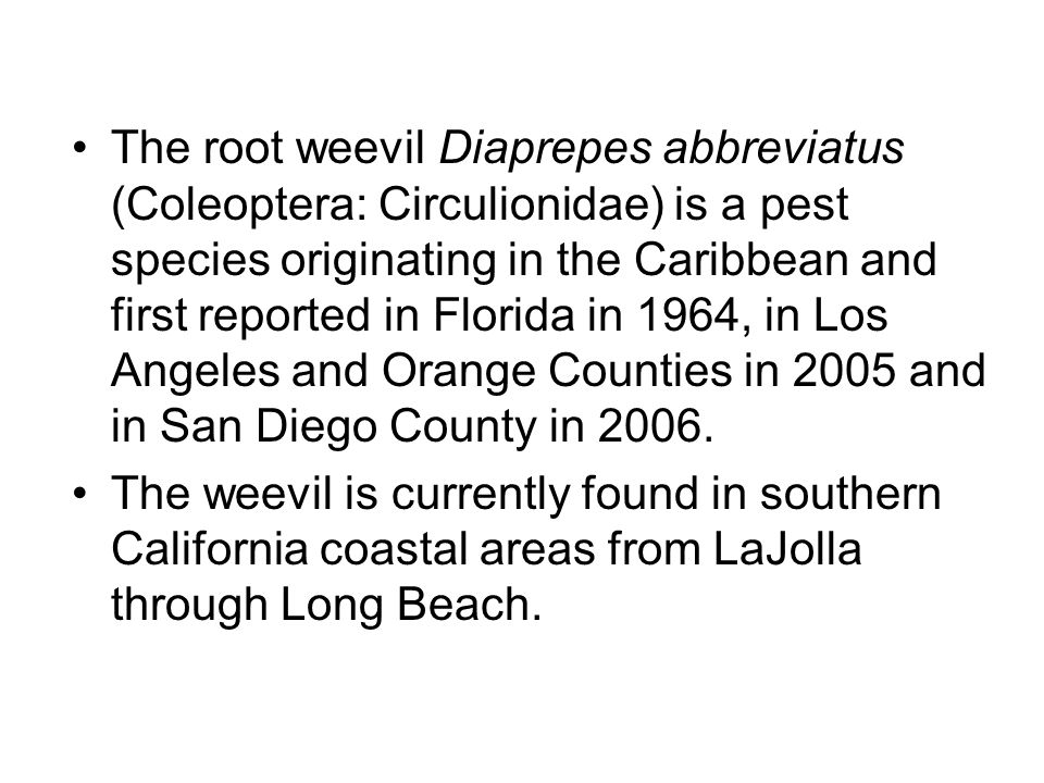 The root weevil Diaprepes abbreviatus (Coleoptera: Circulionidae) is a pest species originating in the Caribbean and first reported in Florida in 1964, in Los Angeles and Orange Counties in 2005 and in San Diego County in 2006.