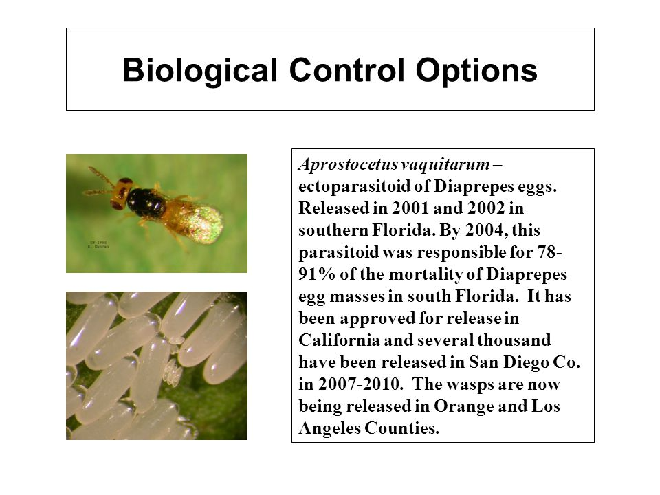 Biological Control Options