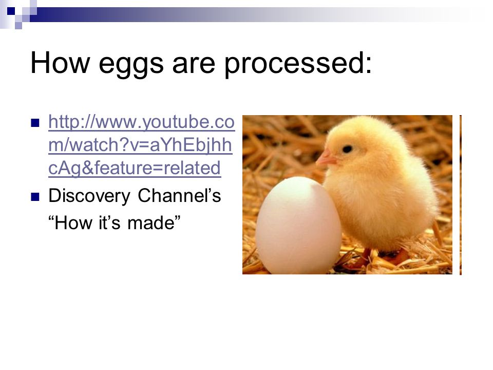 How eggs are processed: