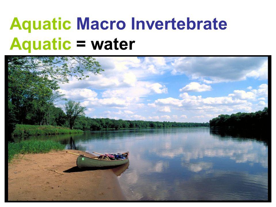 Aquatic Macro Invertebrate Aquatic = water
