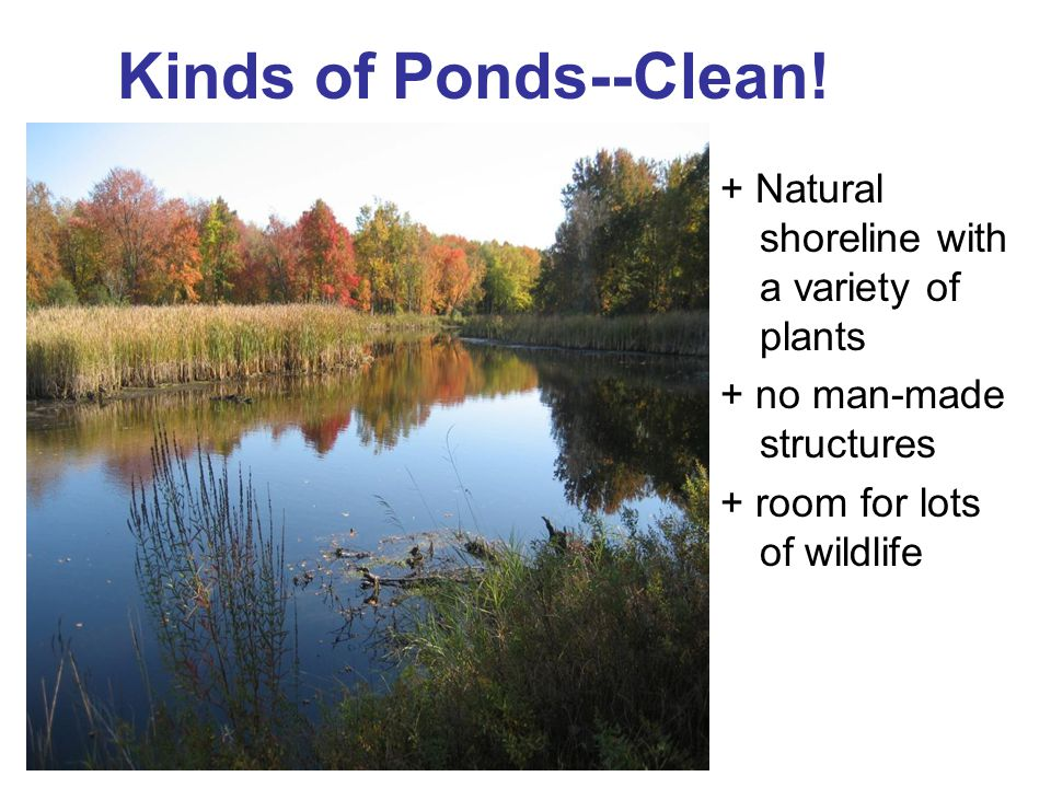 Kinds of Ponds--Clean! + Natural shoreline with a variety of plants