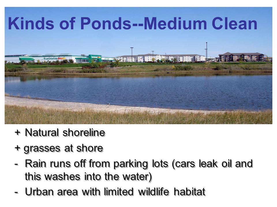 Kinds of Ponds--Medium Clean