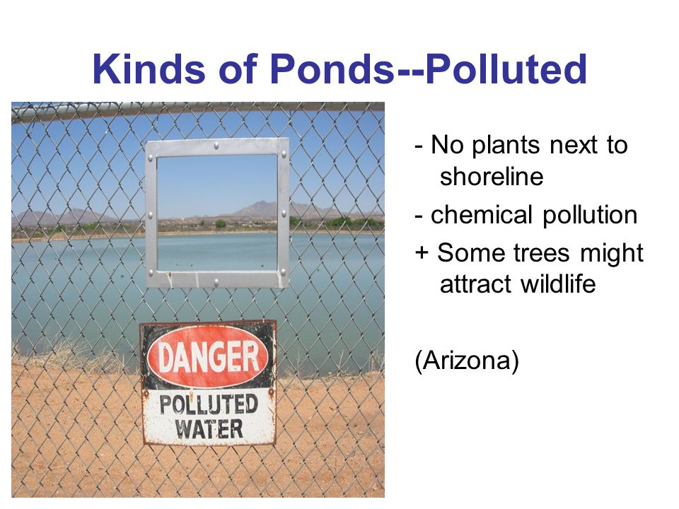 Kinds of Ponds--Polluted