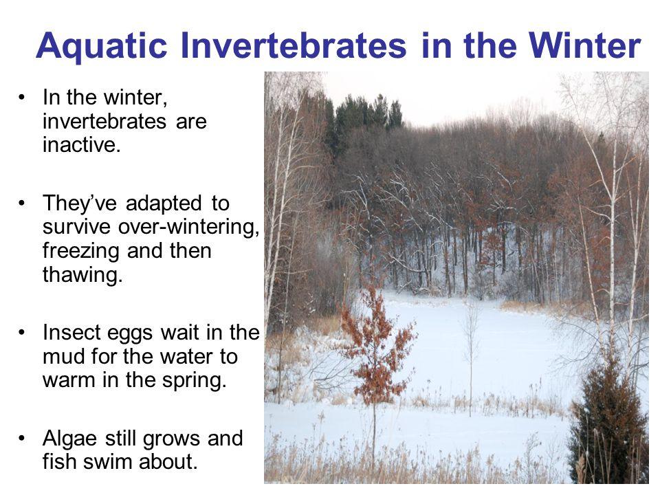 Aquatic Invertebrates in the Winter