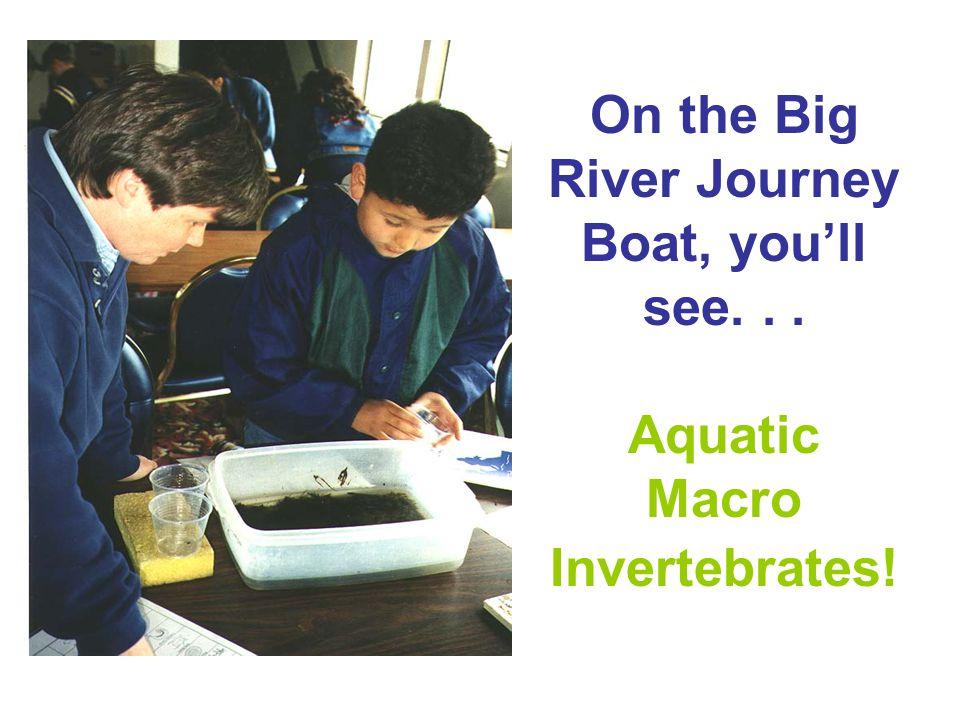 On the Big River Journey Boat, you'll see. . . Aquatic Macro Invertebrates!