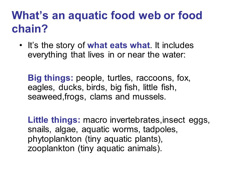 What's an aquatic food web or food chain
