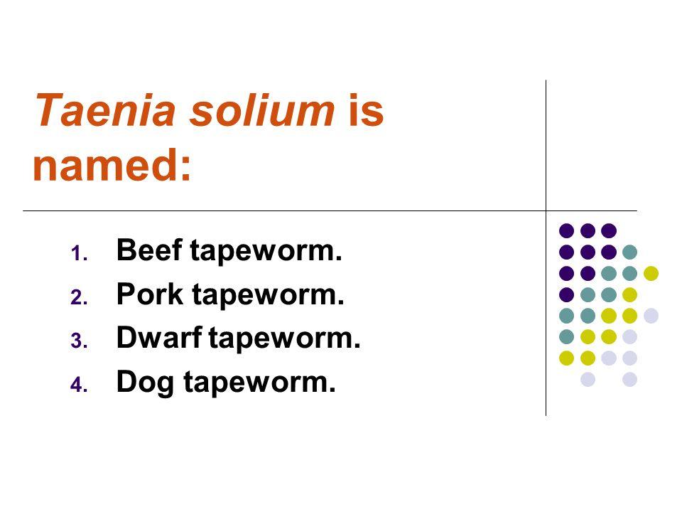 Taenia solium is named: