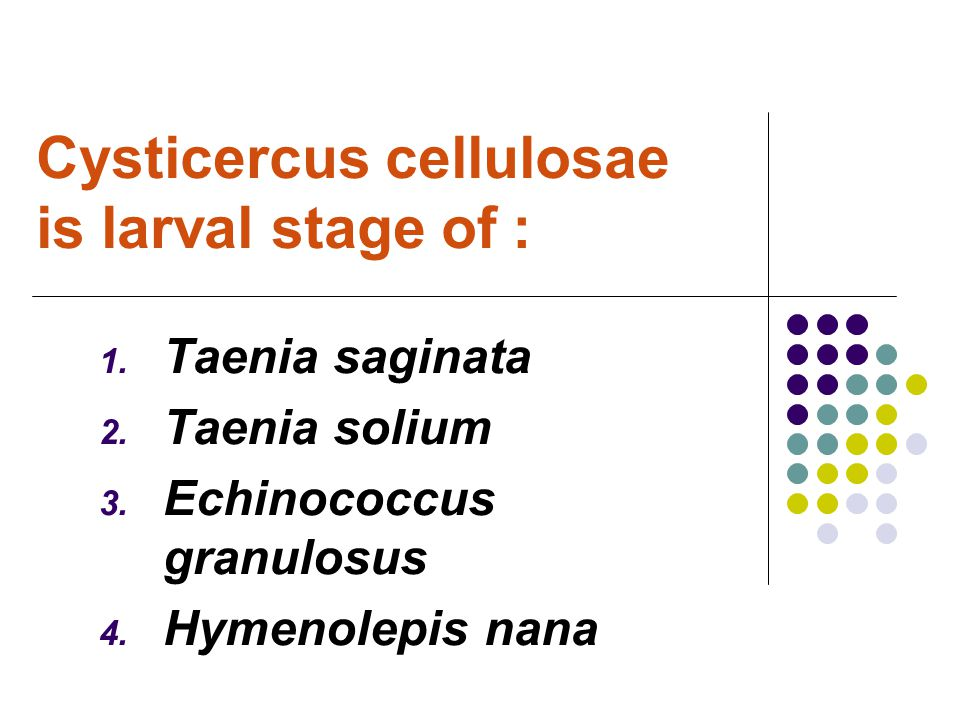 Cysticercus cellulosae is larval stage of :