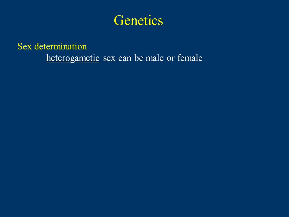 Genetics Sex determination heterogametic sex can be male or female