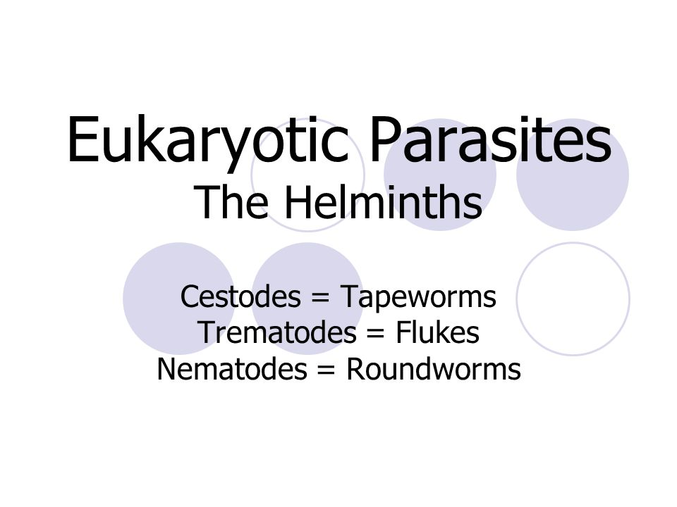 Eukaryotic Parasites The Helminths Cestodes = Tapeworms Trematodes = Flukes Nematodes = Roundworms