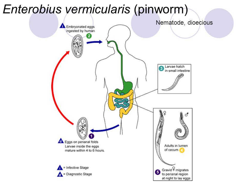 Eukaryotic Parasites (Protozoa) Drs. Babcock and Hopkins ...