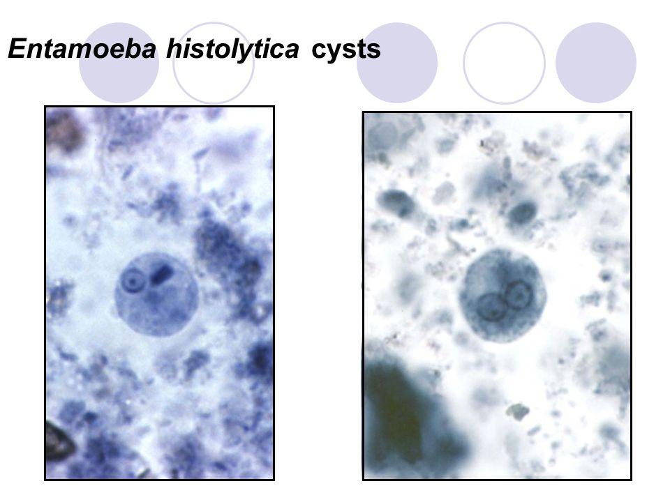 entamoeba histolytica life cycle pdf